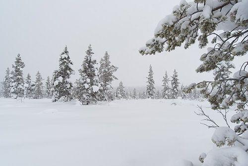 bomen onder de sneeuw