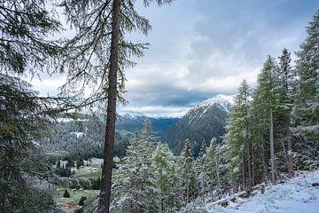 Baumlinie Österreich von Sonny Vermeer