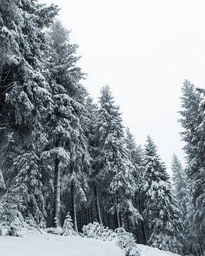 Mystischer Wald von Max Müller