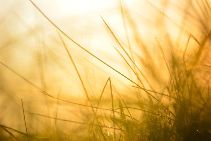 Zonsondergang door het gras in de Achterhoek van Arno Wolsink