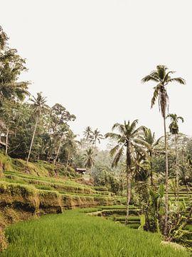Tegalalang Rijstterras / rijstvelden Ubud Bali 2 van Photo Atelier