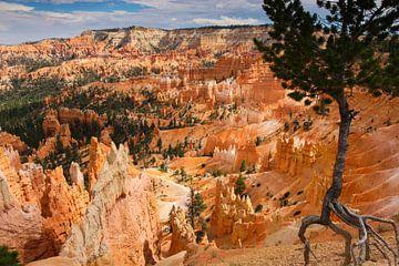 Bryce canyon national park van Ilya Korzelius