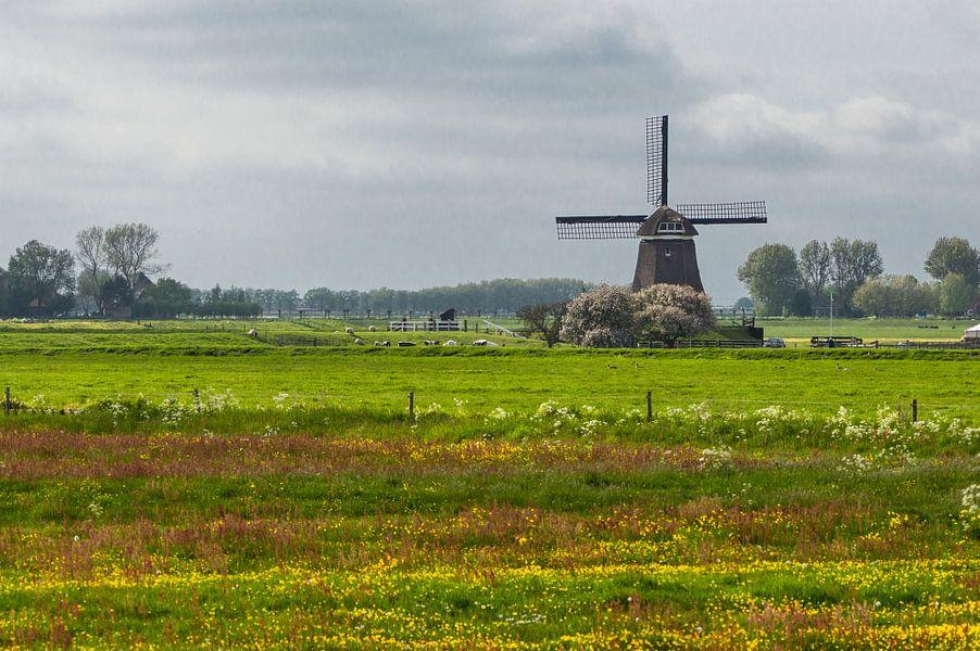 Typisch Nederland van Brian Morgan