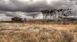 Tasmanië - Australie van