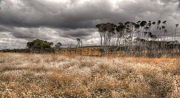 Tasmanië - Australie van Arthur de Rijke