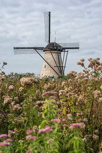 Moulin à digues pour enfants dans un champ de fleurs
