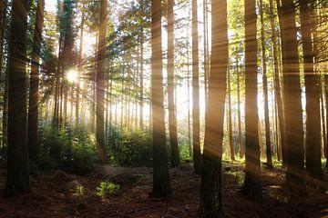 Sunlight von Michelle Zwakhalen
