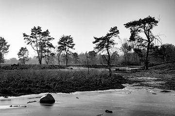 Mandefjild bij Bakkeveen in de winter, zwart-wit von Tilja Jansma