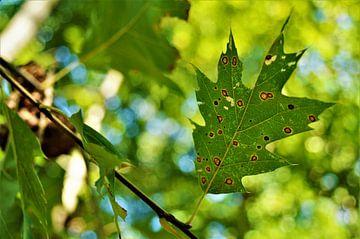Herfst in het Zonlicht van DoDiLa Foto's