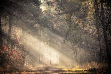 Einsame Wanderer von Fabrizio Micciche