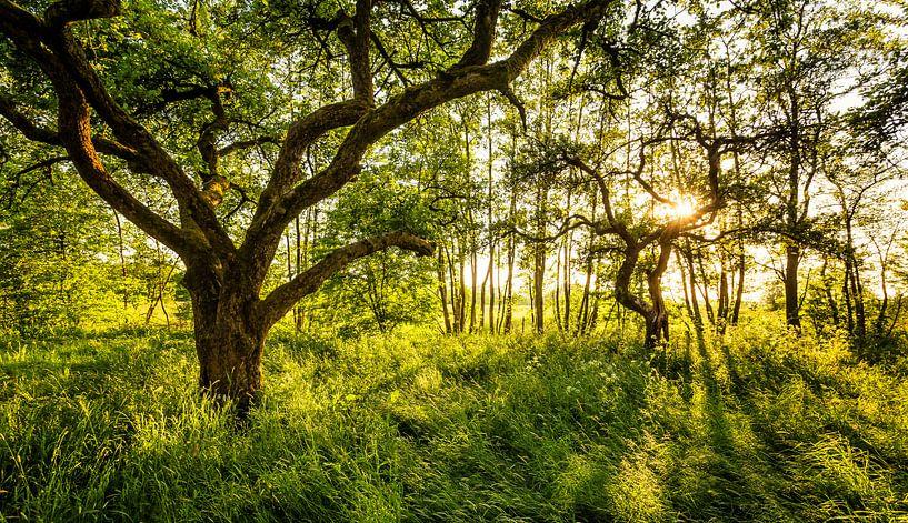 Tegenlicht in boomgaard Westerkwartier van Martijn van Dellen
