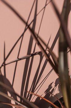 roze rode muur - plant schaduw van Lisanne Koopmans