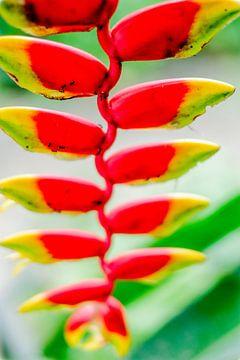 Kleurrijke tropen van pixxelmixx