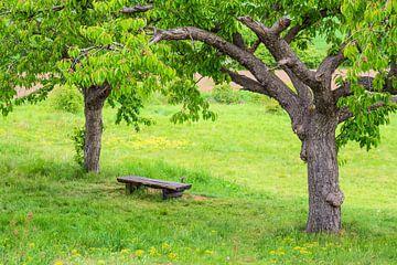 Landschaft mit Bäumen und Sitzbank im Harz von Rico Ködder