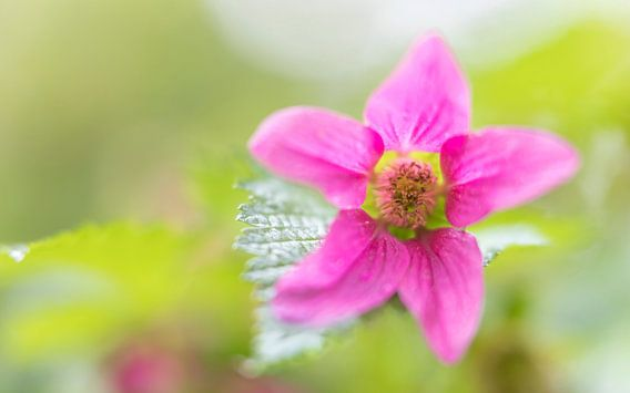 Kleurrijk bloemetje in het bos van Jacqueline de Groot