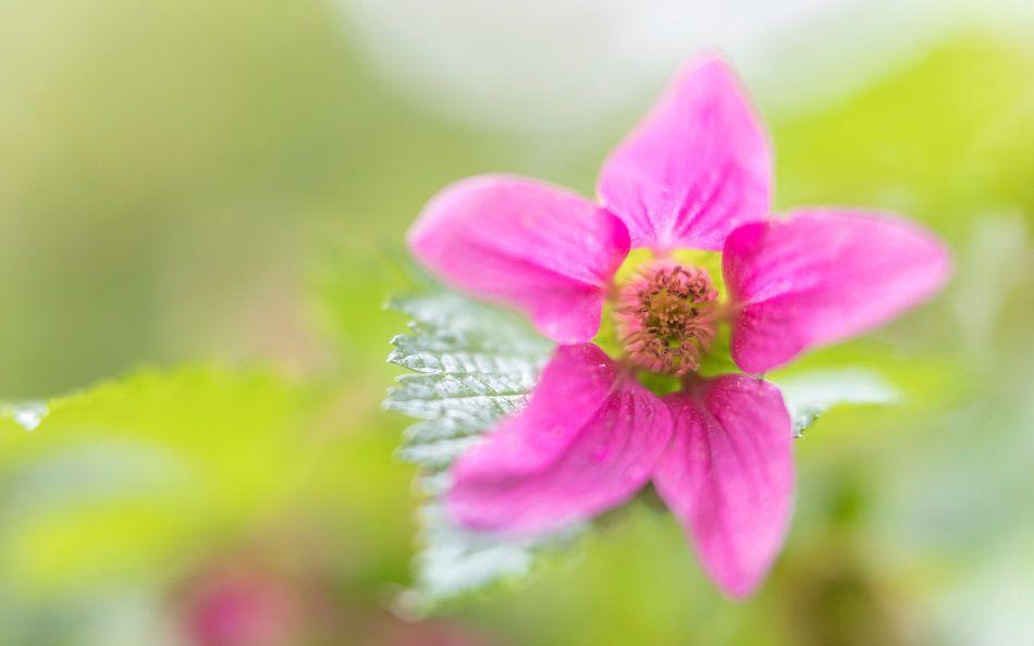 Kleurrijk bloemetje in het bos