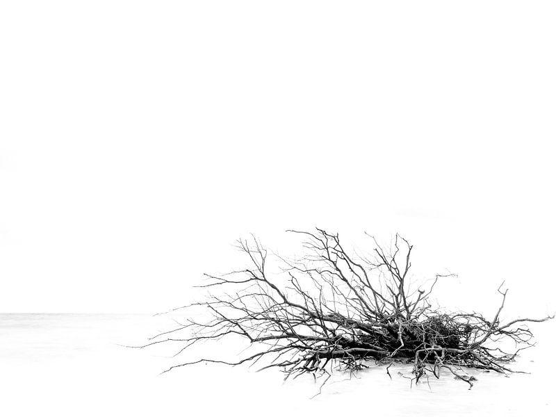 End of a tree van Lex Schulte
