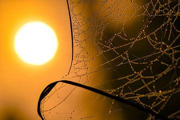 Tau auf dem Spinnennetz bei Sonnenaufgang von Karen Hammega