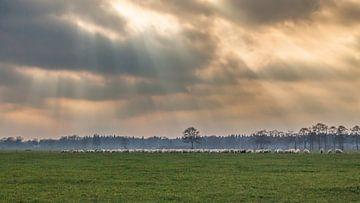 schapen met zonneharp van w grob