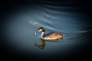 Sommer - Lappentaucher von Martin Boshuisen - More ART In Nature Photography