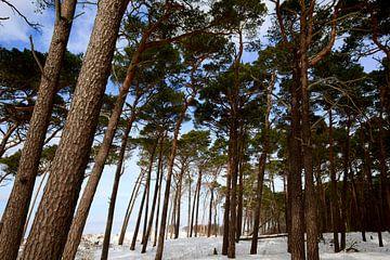 Ostsee Weststrand von Thomas Jäger