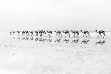 Kamelkarawane über eine Salzebene   Äthiopien von Photolovers reisfotografie