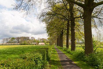 Fietspad Rhijnauwenselaan langs de Kromme Rijn