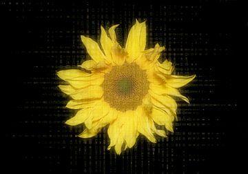 Digitale Phantasie einer wilden Sonnenblume von Ribbi The Artist