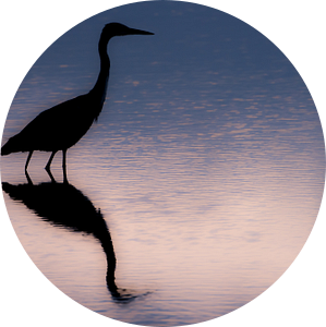 Sunrise of the Blue Heron  van Harald Harms