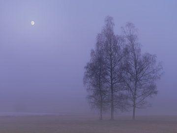 Herfst in de Weiherwiesen (3) van Max Schiefele