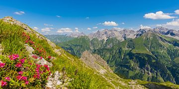 Alpenrozen en Allgäuer Alpen van Walter G. Allgöwer