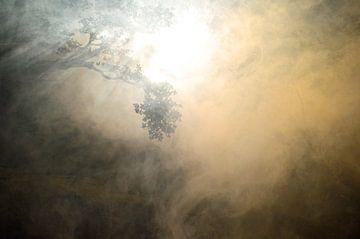 Boomtakken in de rook met een mooie lichtval van Ronald H