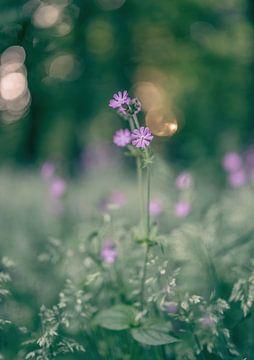 bloemen part 133 van Tania Perneel