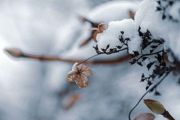 bloemen part 43 van Tania Perneel