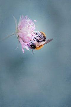 Bijen foerageren van Anneliese Grünwald-Märkl