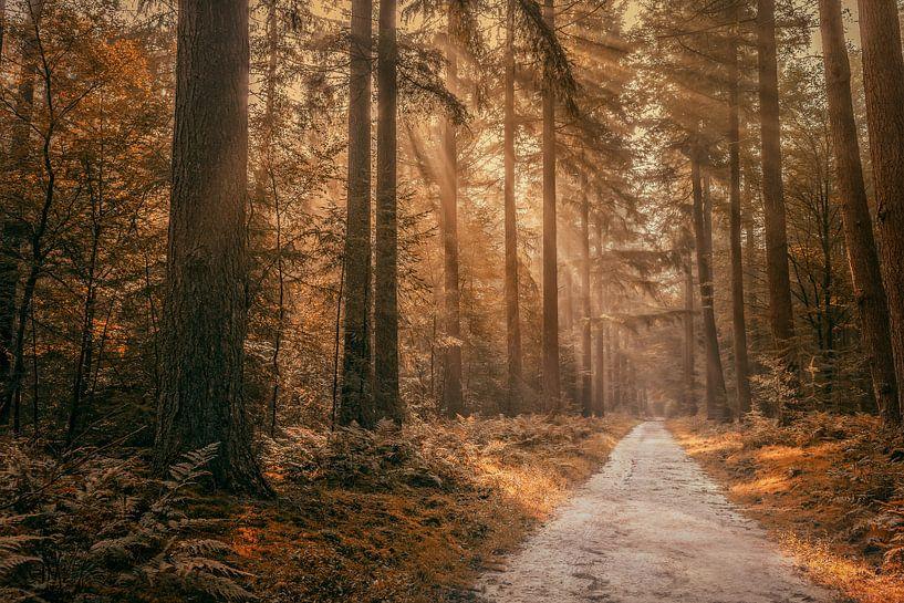 Autumn in the forest von Tim Abeln