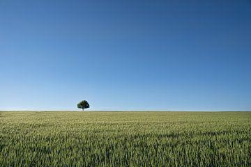 Der einsame Baum auf dem  Feld von Marc-Sven Kirsch