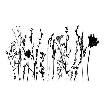 Botanische illustratie met planten, wilde bloemen en grassen 10.  Zwart wit.