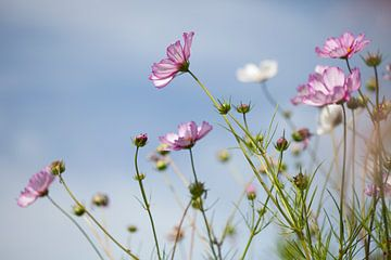Blumen in Feld 2 von Esther Erkelens