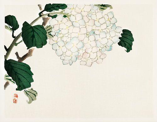 Japanse Hortensia illustratie door Kōno Bairei