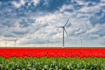 Tulpenveld met windturbine's in de Flevopolder. van Ron van der Stappen
