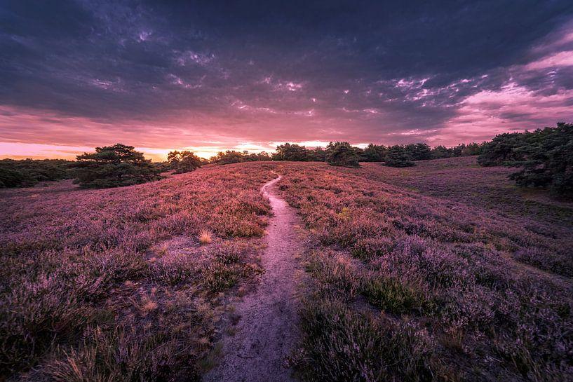 purple lagoon van Bas Handels