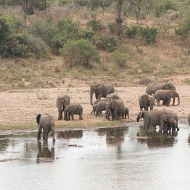 Kudde olifanten van Riana Kooij