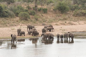 Kudde olifanten sur Riana Kooij