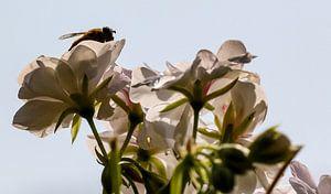 bloemen en bij van Frans Versteden