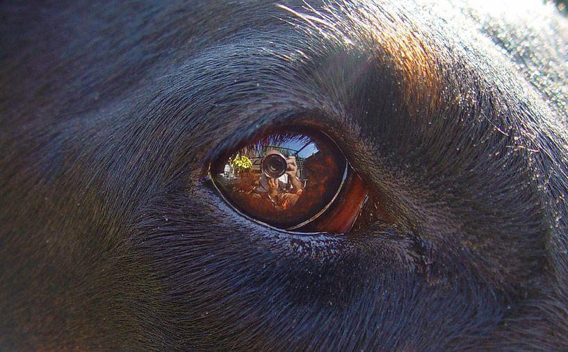 Hondenoog van Coen de Haan