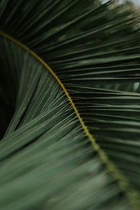 feuille de palmier sur Marloes Floor