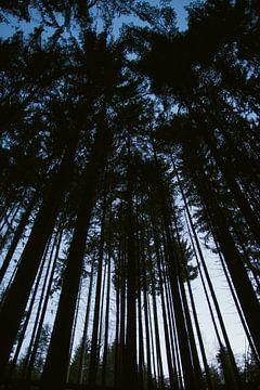 Hoge bomen in de Vogezen von Jeanine Verbraak