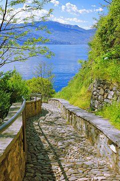 Weg zum See von Gisela Scheffbuch