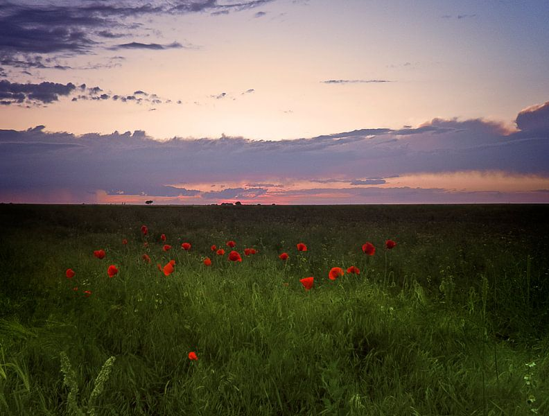 Sunset poppies van Ruxandra Proksch